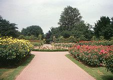 queen mary's rose garden: Photo by Roger Wollstadt