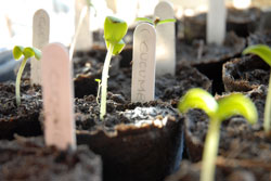 why buy heirloom seeds